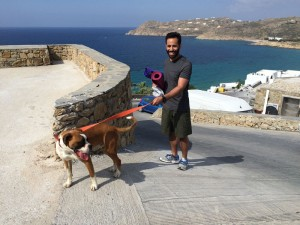 Yoga Dog Mykonos