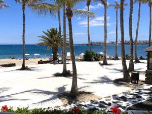 palm-trees-lanzarote-canary-islands-yoga-retreat