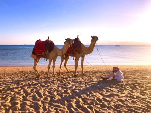 camel-beach-luxury-yoga-retreat-egypt