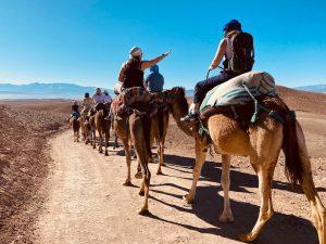 camel-rides-yoga-retreat-morocco