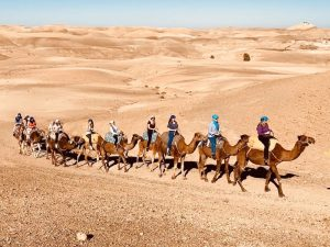 camels-desert-luxury-yoga-retreat-morocco