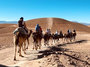 camels-in-the-desert-yoga-retreat-morocco